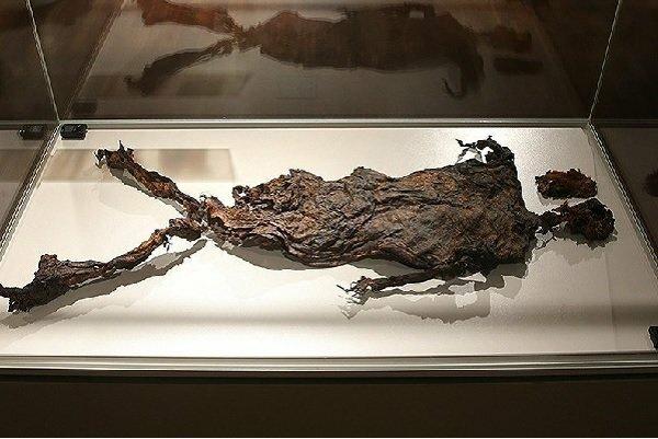 ۵۸ هزار نفر از نمایشگاه آثار تاریخی هلند در ایران بازدید کردند